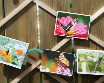 Spring butterfly, dragonfly and flower photograph assorted blank cards 4 pk- 12 pk. Photographs taken by myself, colorful spring cards