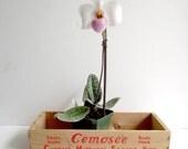Wooden Cheese Crate West German Cemosee Red Orange Storage Display Box Planter