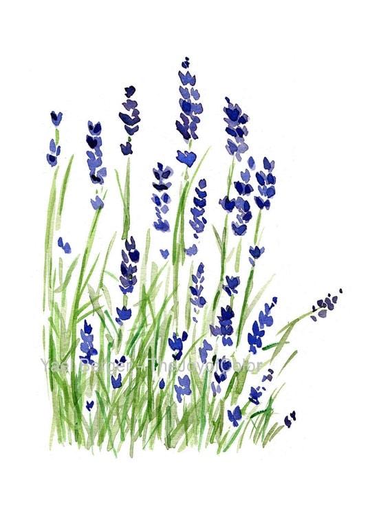 Lavender plant  art print, Lavender watercolor print, purple lavender, green, Plants, Botanical herb, February birthday, mothers day