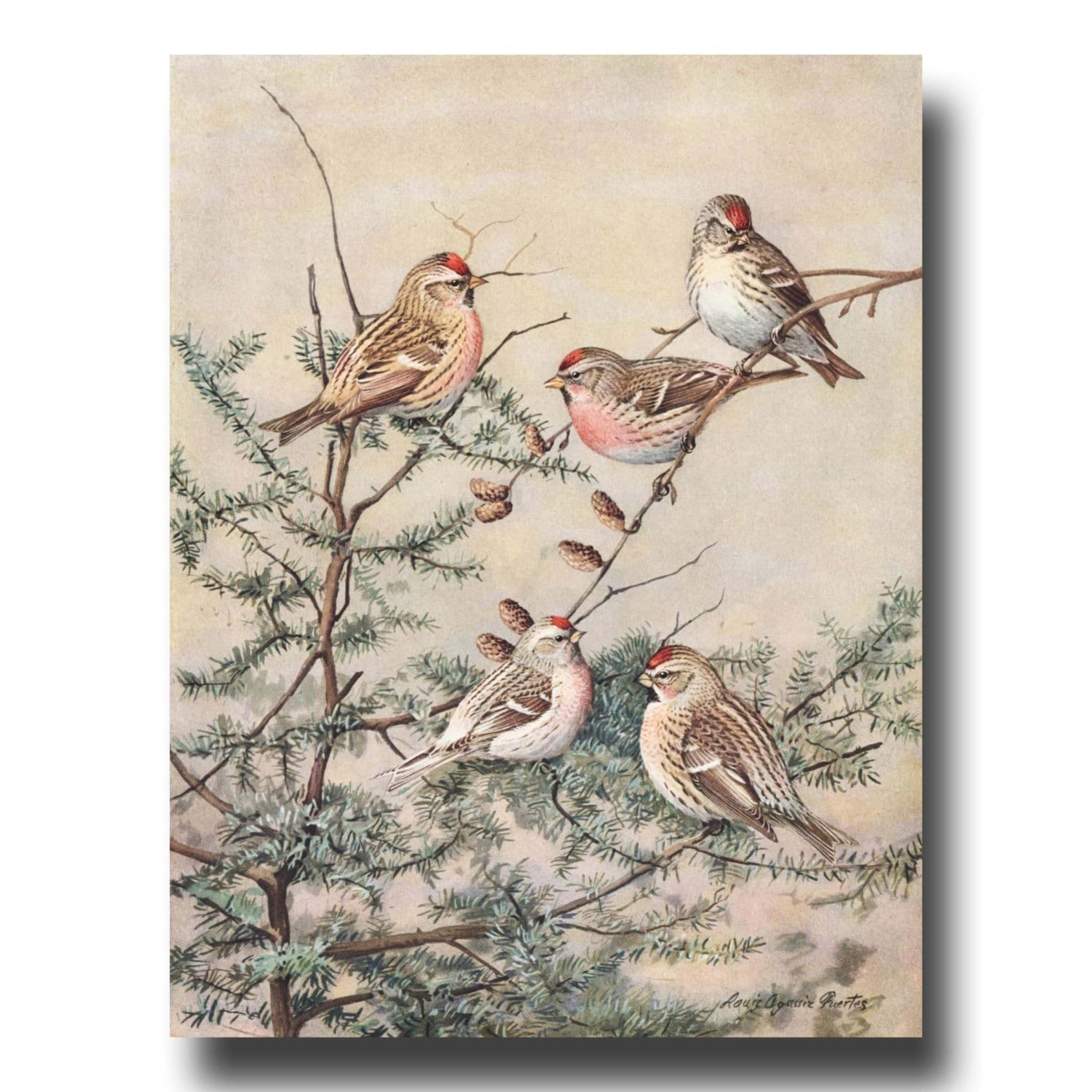 Bird prints bird art antique bird wall decor 1930s vintage for Bird wall art