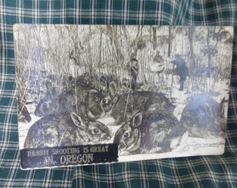 Rabbit shooting is GREAT in Oregon.  cprted 1909 by W H Martin.  Exaggerated rabbit vintage postcard
