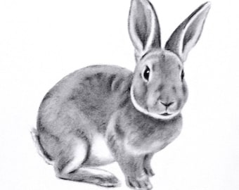 "Rabbit Art, ORIGINAL Charcoal 5""x7"" Rabbit Drawing, Bunny Sketch- Easter Art - Nursery Art - Bunny Art, Charcoal Sketch"