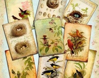 SPECIAL FLIGHTS - shabby chic digital collage sheet printable scrapbooking - birds nature nest eggs jewelry holder paper goods - ac257