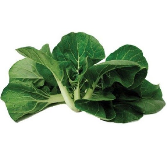 50 seeds pak choi cabbage seeds win choi mini pak choi seeds. Black Bedroom Furniture Sets. Home Design Ideas