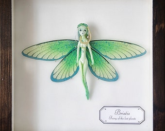 Briséis,fairy in an Entomological box