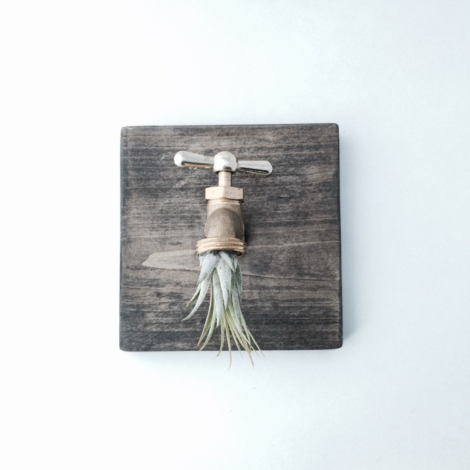 Industrial Air Plant Wall Decor Living Art By