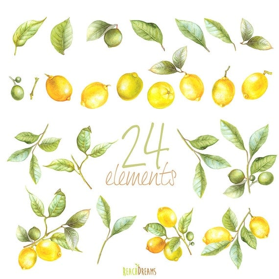 Lemon Watercolor Clipart Hand Painting Fruit Lime By Reachdreams