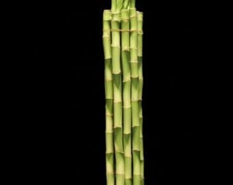 50 Stalks 5 Bundles Of 8 Inches Straight Lucky By Specialgreen
