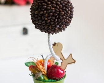 Topiary, coffee tree. Tree of happiness. Fruit-coffee tree. Home decor.
