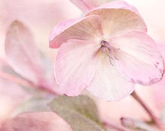 Pink Flower Photo, Pastel Pink Decor, Shabby Chic Decor,  Cottage Chic Wall Decor, Flower Photography, Floral Art Print, Pink Flower
