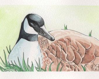 Sitting Goose | 4x6 Original Watercolor