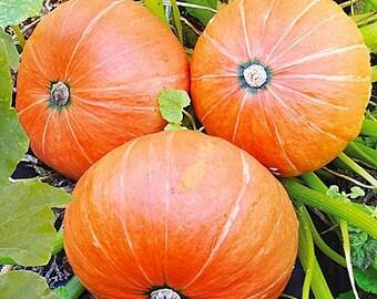 Seeds Pumpkin Amazon Organic Heirloom Vegetable Seed from Ukraine #601