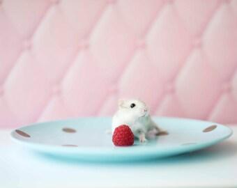 Daisy loves berries
