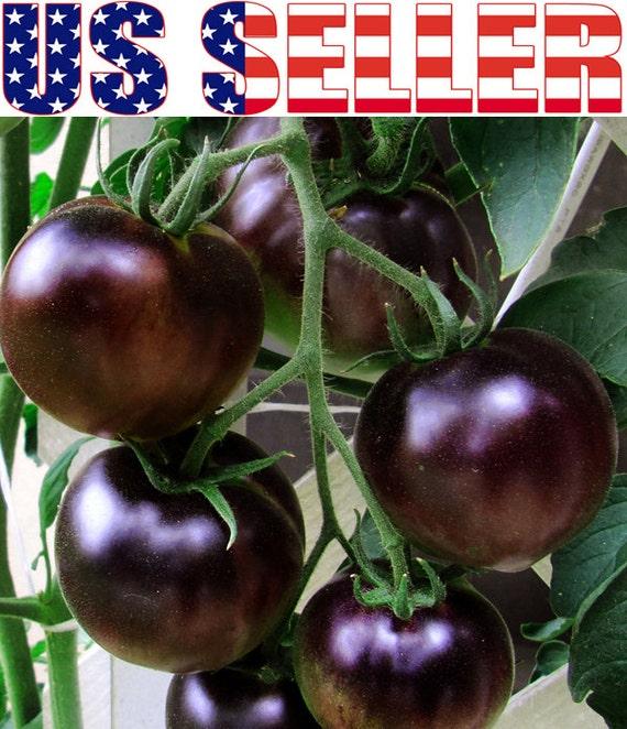 30 organic black cherry tomato russian heirloom by harleystore. Black Bedroom Furniture Sets. Home Design Ideas