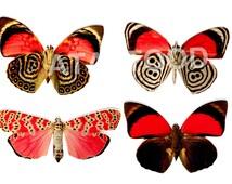 Butterflies Set/4 Temporary Tattoos