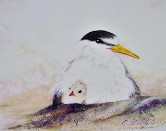 "Watercolor Print ""Mothers Love"" Seagull Bird Coastal Beach B. Feyedelem"
