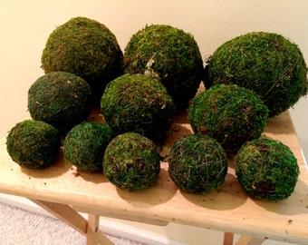 "2"" Preserved Moss Balls"