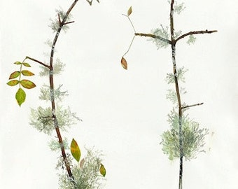 Lichen branches. Leaves of Los Angeles, Archival prints (Watercolor Art Print)