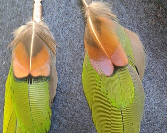 Feather earrings with green macaw and pheasant feathers