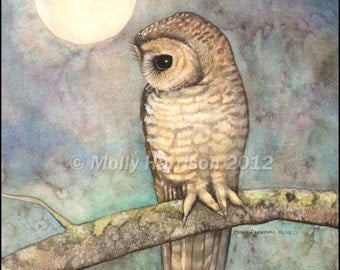 Northern Spotted Owl Wildlife Watercolor Fine Art Print by Molly Harrison 8 x 10