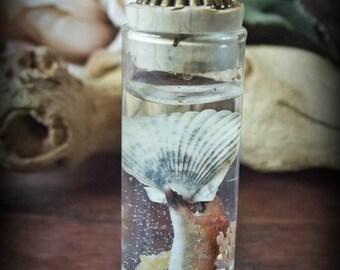 Crab Claw W/ Shell
