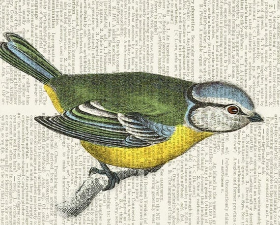 titmouse dictionary page print