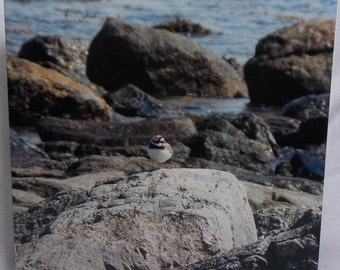 Ringed Plover card