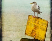 Seagull Seashore Water Humorous Sign Photograph--No Dogs Allowed--Fine Art