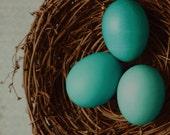 Nest photo with blue eggs, blue egg photo, nature decor, rustic photo, rustic decor, nest art, kitchen decor, turquoise egg photo, egg art