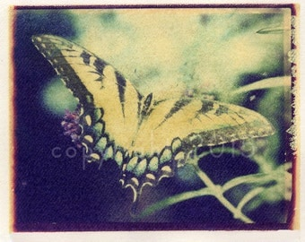Polaroid transfer - Tiger swallowtail