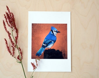 FINE ART PRINT Blue Jay of the Adirondacks-8x11inch / A4