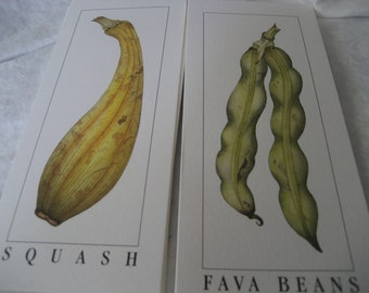 Set of 8 VINTAGE Litho Squash & Beans Vegetable Prints Note Cards to Frame or Collage