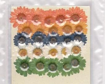Real pressed flowers- DAISIES Designer Packs-25 flowers per pack