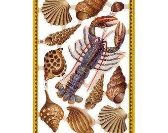 England Paper Lithograph Die Cut Scraps Sea Shells Animals  A-130