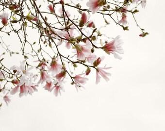 Flower Photography Print Magnolia Floral Pink Home Decor Art