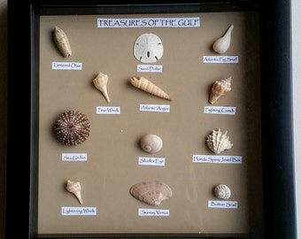Seashell Shadowbox featuring shells of the Gulf of Mexico