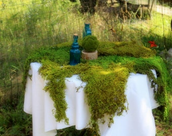 6 Square feet BULK-Preserved Sheet Moss-Delicate Fern Moss-2 feet by 3 feet-Bonsai-Wedding Decor-Woodland Party