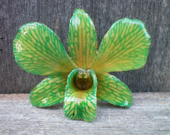 Free Shipping REAL Natural Vibrant Shades of Green and Yellow ORCHID Pin and Pendant