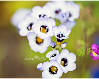 Spring White and Purple Blossoms Flower Fine Art Canvas wrap- macro 2