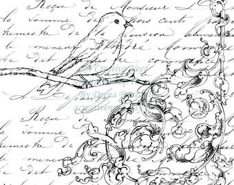 Instant Download Digital Stamp Image Bird Flourish and Script Collage