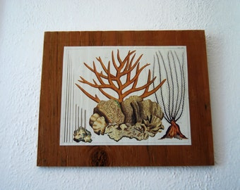 Reclaimed Wood Cabinet Print, Coral, Beach