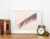 Palm - Tropical Summer Home Decor Photograph