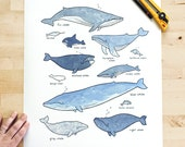 Large whales print 16x20, whimsical ocean illustration, nautical nursery