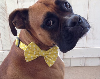 Bow Tie Collar For Larger Dogs