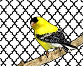 Gregory--2d Mixed Media Goldfinch Painting