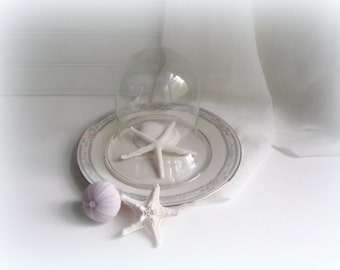 Vintage Glass Cloche Display Plate Terrarium Keepsake Dome Home & Living Collectibles
