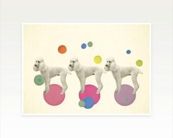 Poodle Art, Dog Print, Nursery Art, Girls Room, Gift for Dog Lover, Kitsch Decor - Oodles of Poodles
