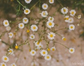 White Daisy Photograph, Flower Photography, Spring Print, Nature Photography, Daisies Print, Girls Room Decor, Dreamy, White Floral Photo