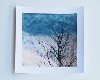 bird art, Archival reproduction, Dove single, 88 editions art
