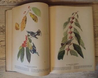 Vintage Audubon Birds of America - 1941 - Over 400 Color Plates of Beautiful Illustrations